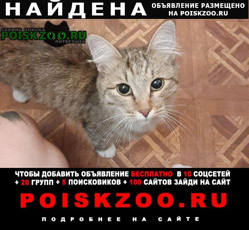 Найдена кошка в районе беговой Москва