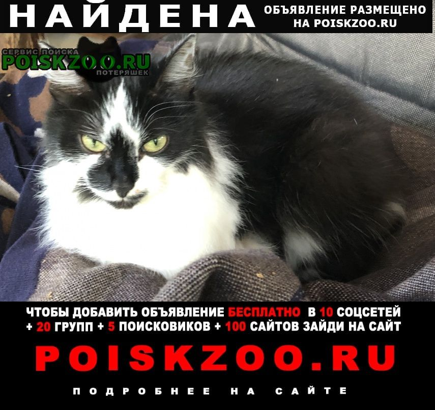 Найдена кошка черно-белая, домашняя Голицыно (Московская обл.)