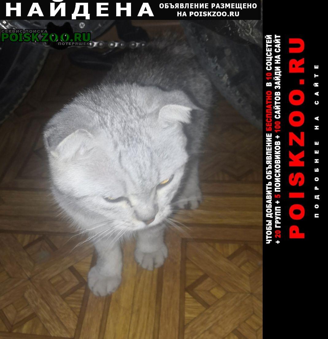 Найдена кошка в районе гор парка - 3гор. Благовещенск (Амурская обл.)