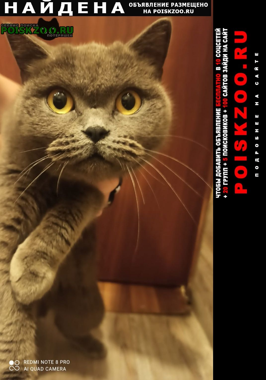 Найдена кошка Чехов