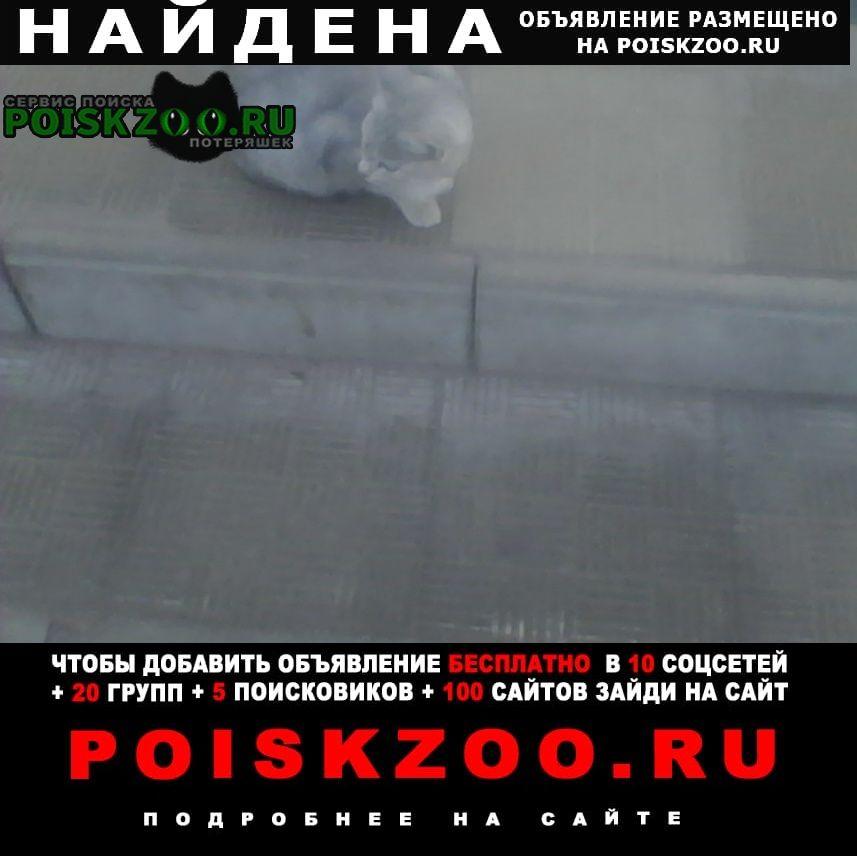 Найдена кошка предположительно кошечка (кот) Тверь