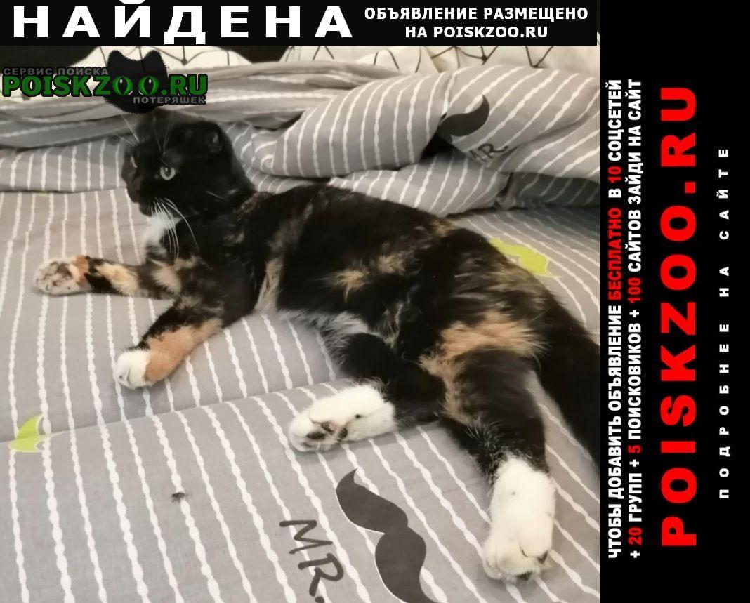 Найдена кошка заволжский район Тверь