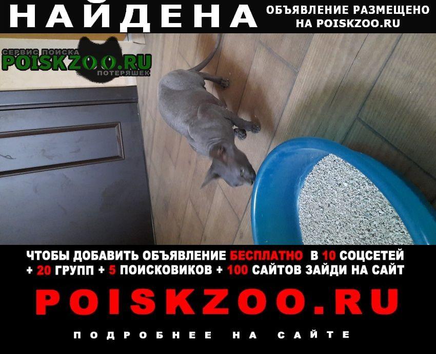Найдена кошка серый сфинк Ростов-на-Дону