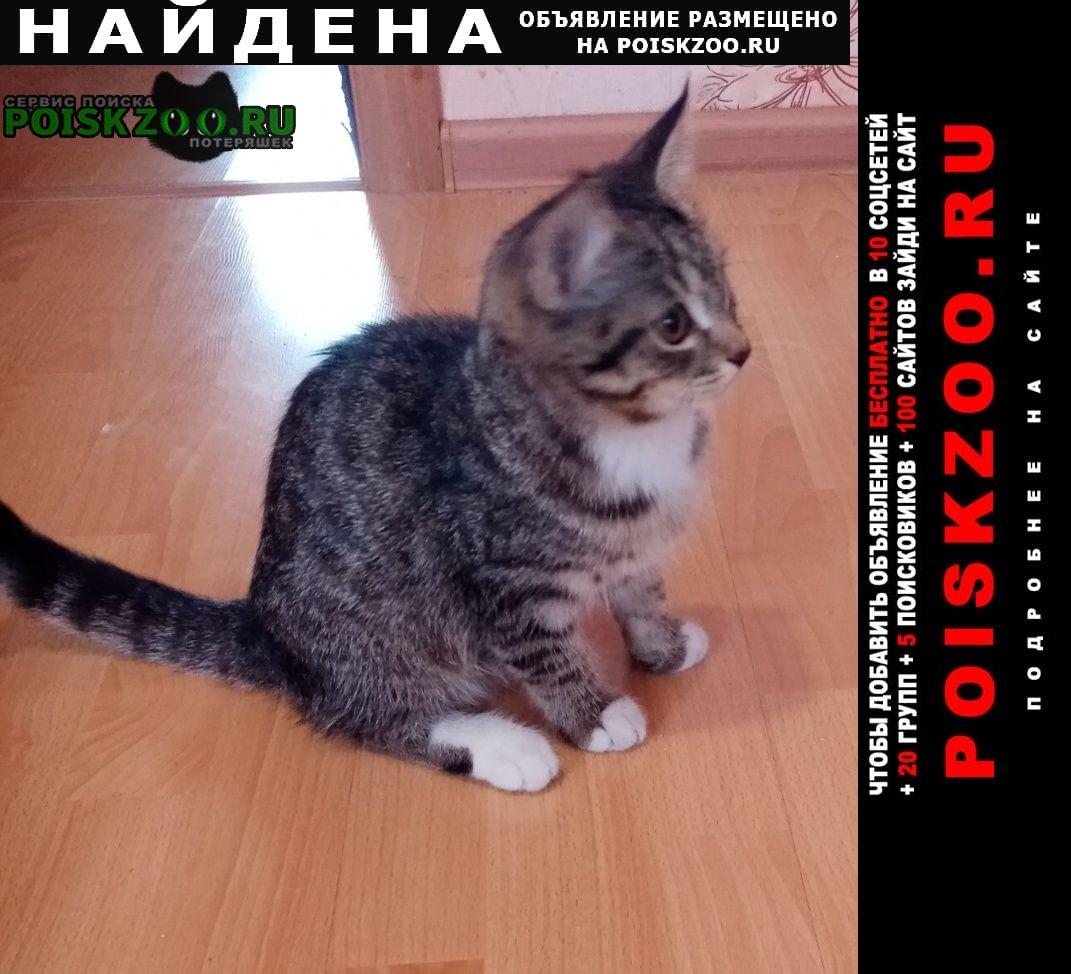 Найдена кошка котёнок 4-5 месяцев Нижний Тагил