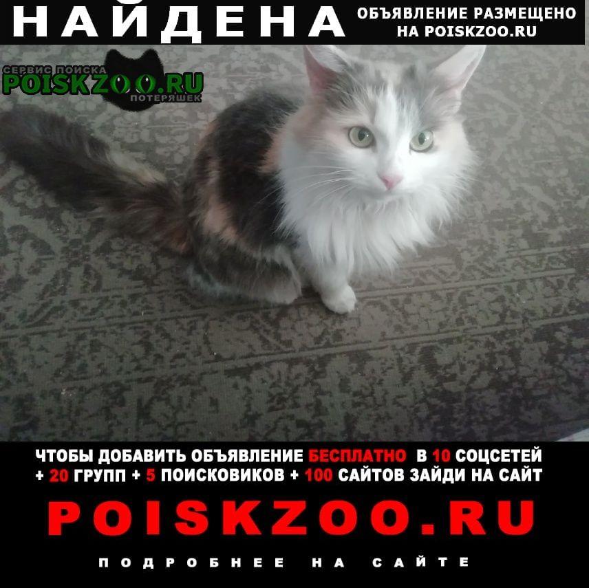 Найдена кошка трехшерстная Москва