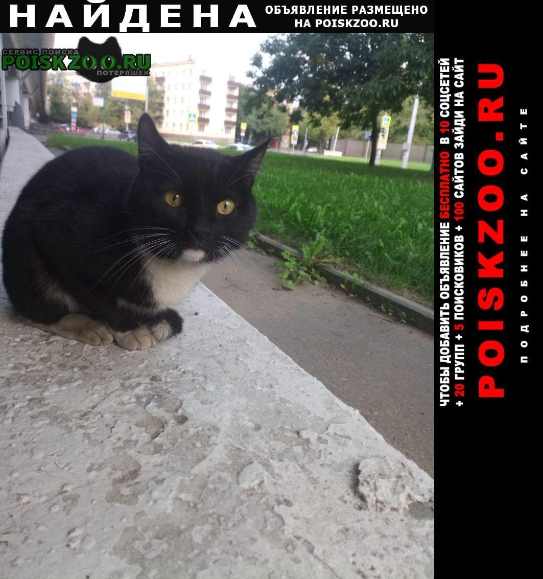 Найден кот черно белый Москва