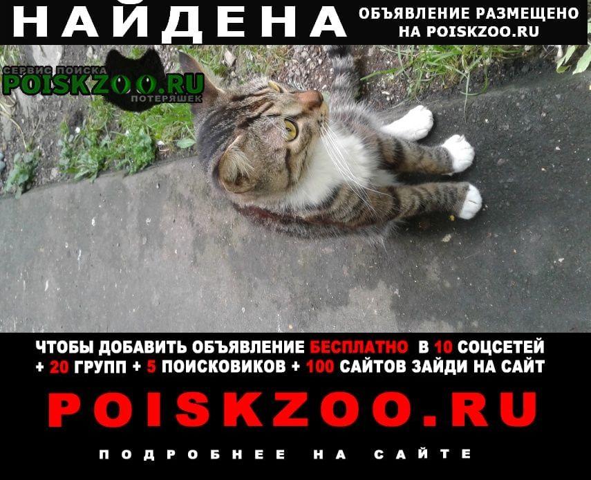 Найден кот севанская ул. Москва