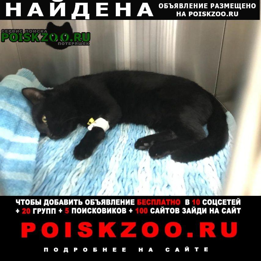 Найден кот черный Хабаровск