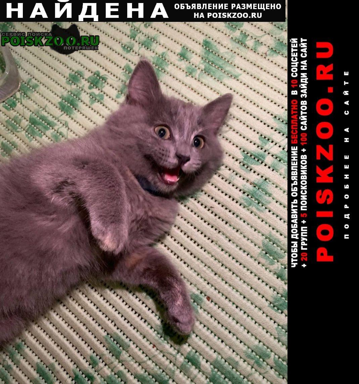 Найдена кошка котенок рядом с капитолием Подольск