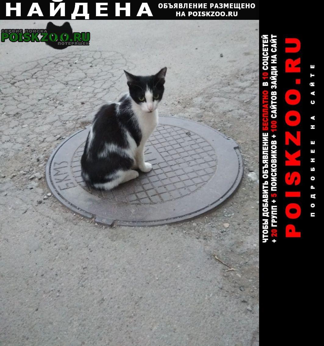 Найдена кошка Каменск-Уральский