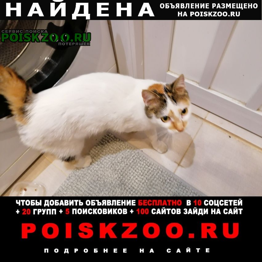 Найдена кошка в южном бутово Москва