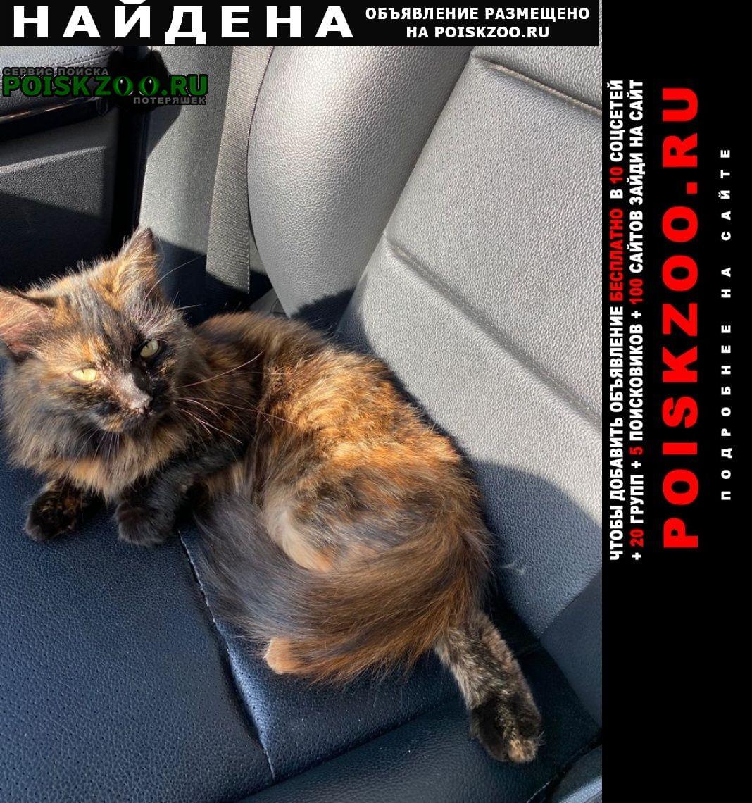Найдена кошка черепахового окраса Мытищи