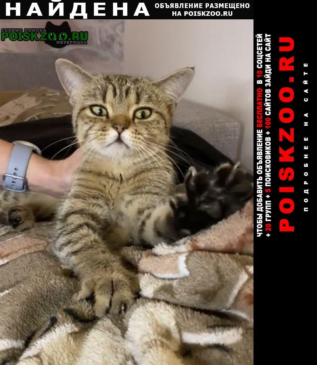 Найдена кошка в районе дер-ни картмазово Московский