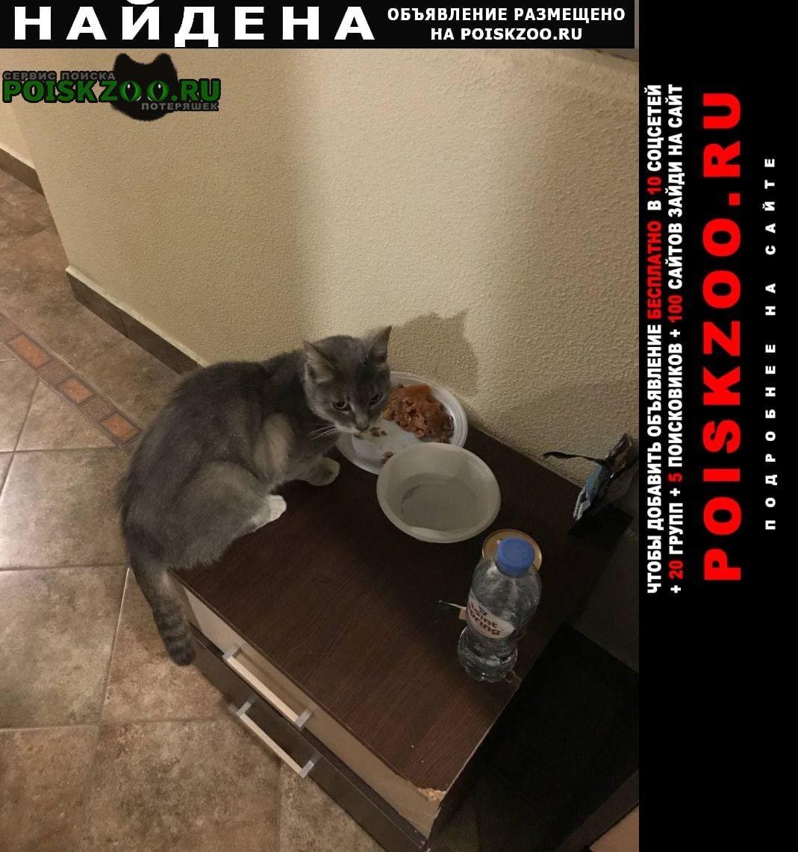 Найдена кошка в районе очаково-матвеево Москва