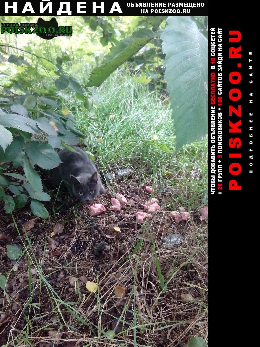 Найдена кошка серая Иваново