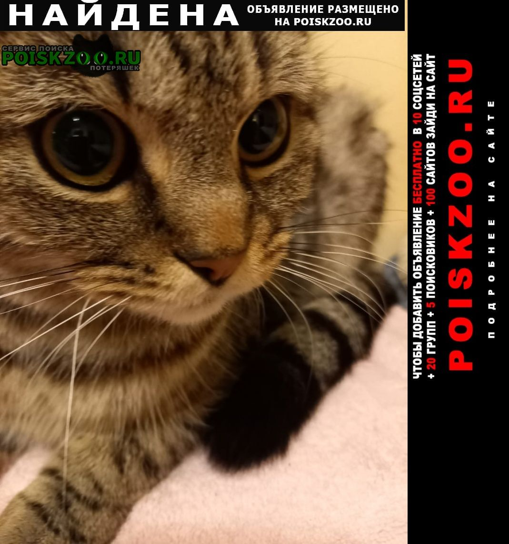 Найдена кошка, оборонная улица Москва