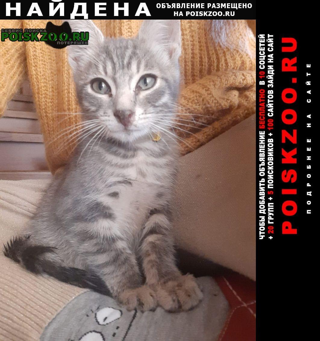 Найдена кошка серый котёнок Фирсановка