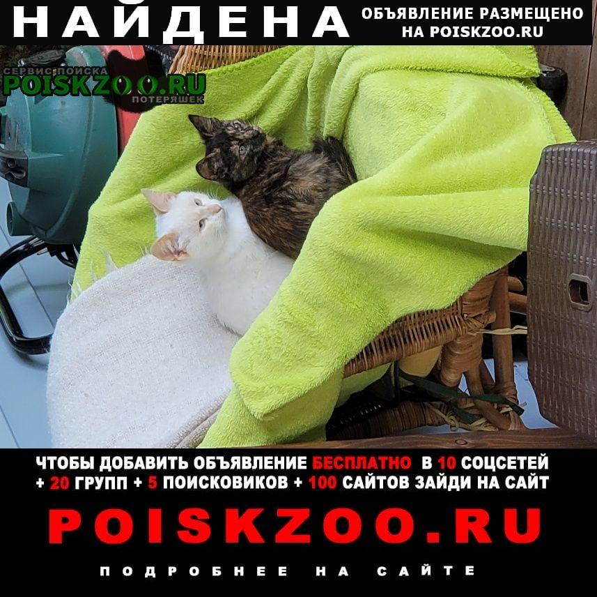 Найдена кошка ищут хозяев Москва