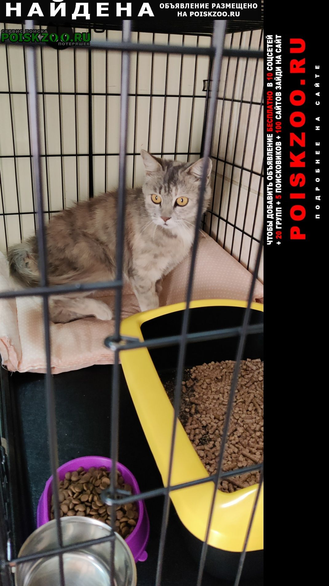 Найдена кошка д.соболиха Железнодорожный (Московск.)
