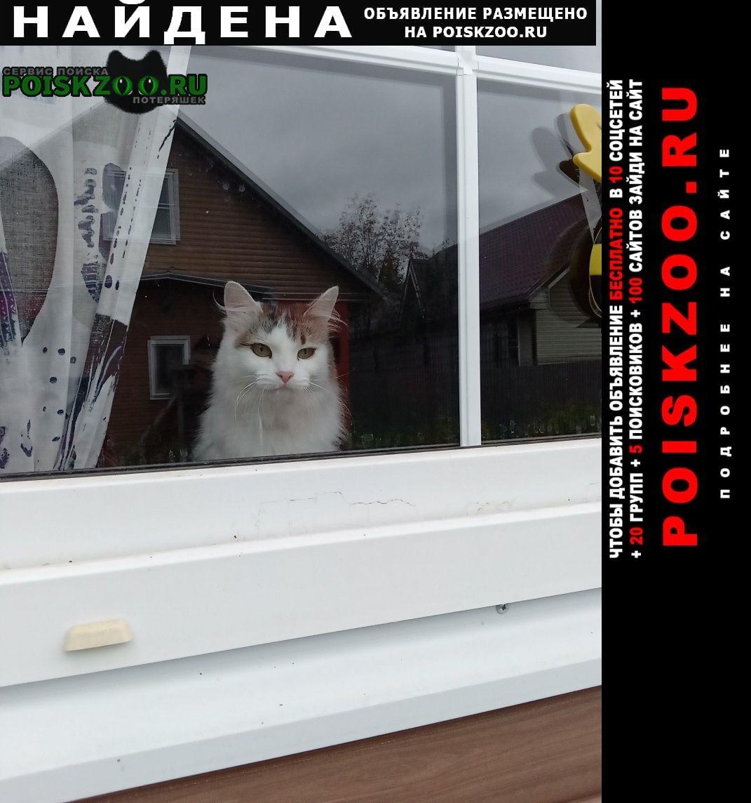 Найдена кошка с розовым ошейником Нарофоминск