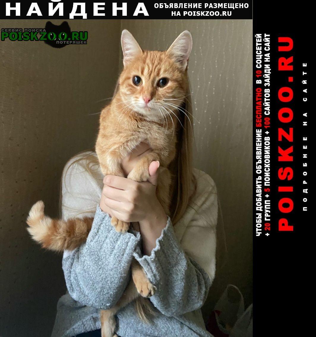 Найдена кошка рыжая, маленькая Ярославль