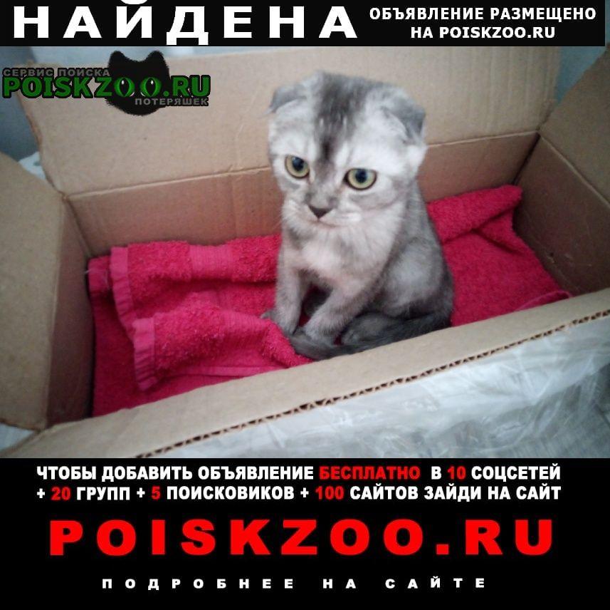 Найдена кошка Калуга