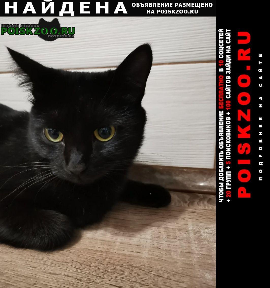 Найден кот черный Самара
