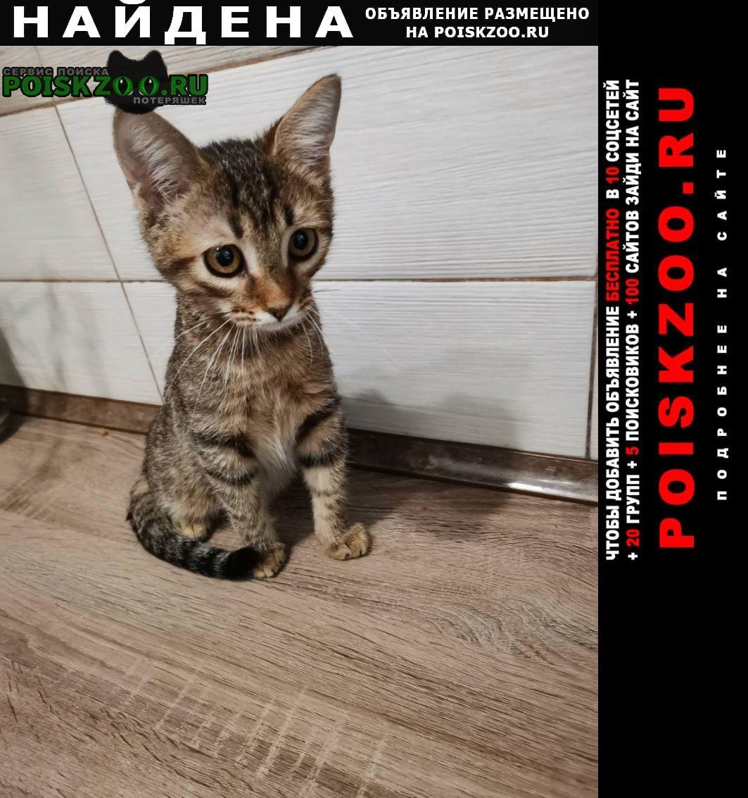 Найдена кошка маленькая девочка. Самара