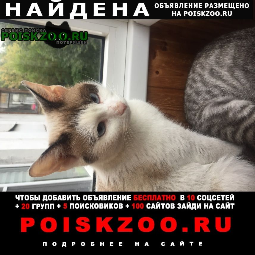 Найдена кошка Москва