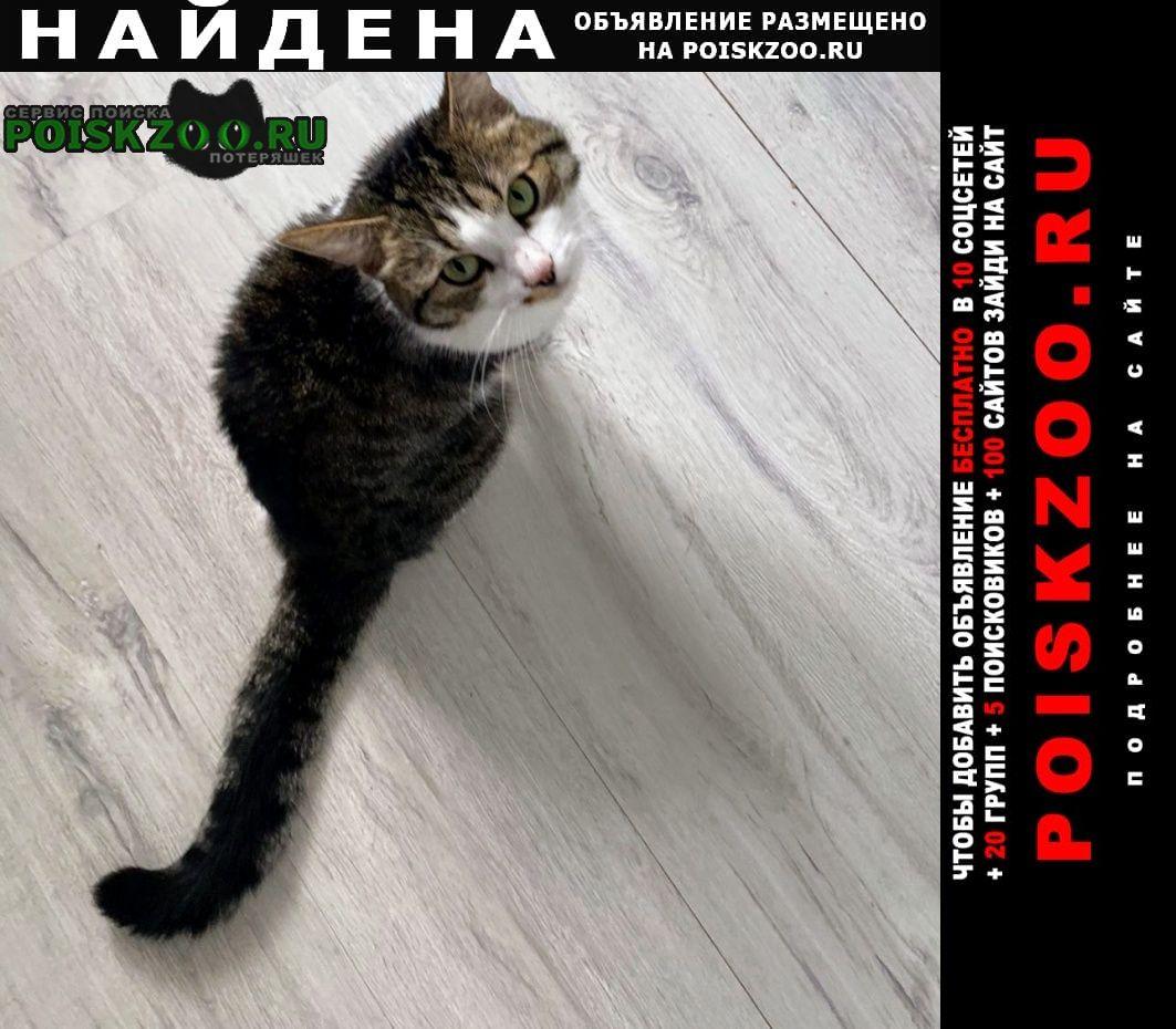 Найден котик годовалый ласковый Москва