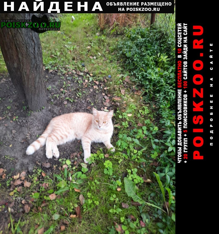 Найден кот кастрированный светло рыжий, палевый Чехов