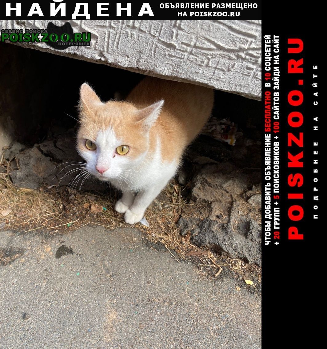 Найдена кошка живет у подъезда Ижевск