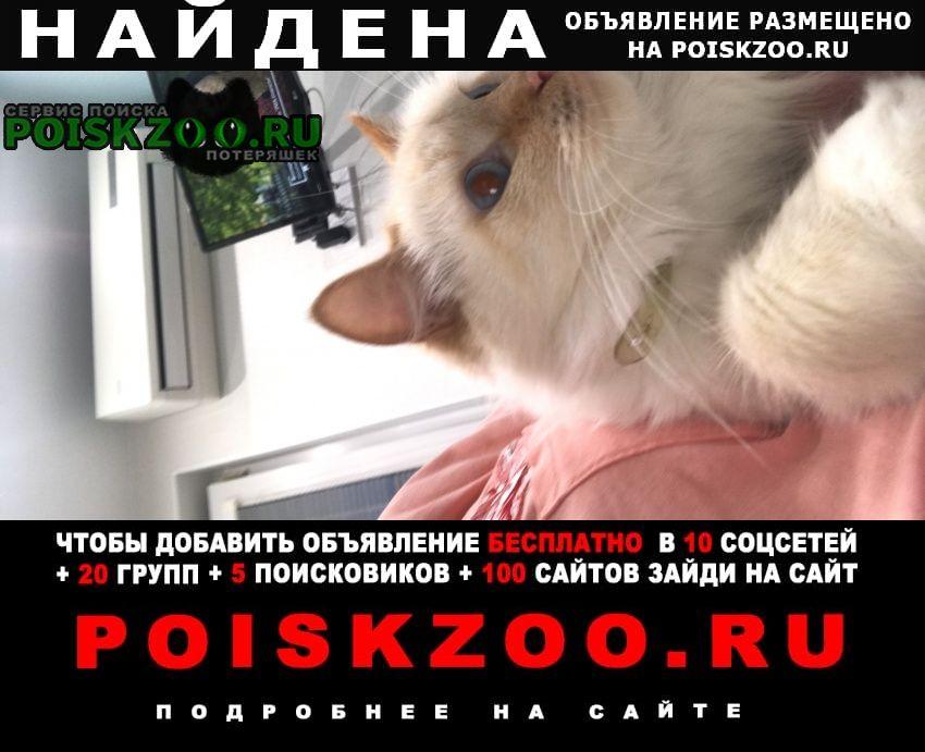 Найдена кошка хозяева найдитесь Москва