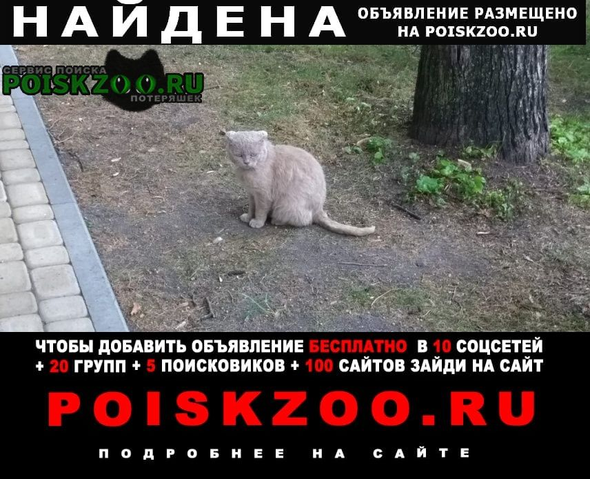 Найдена кошка Ессентуки