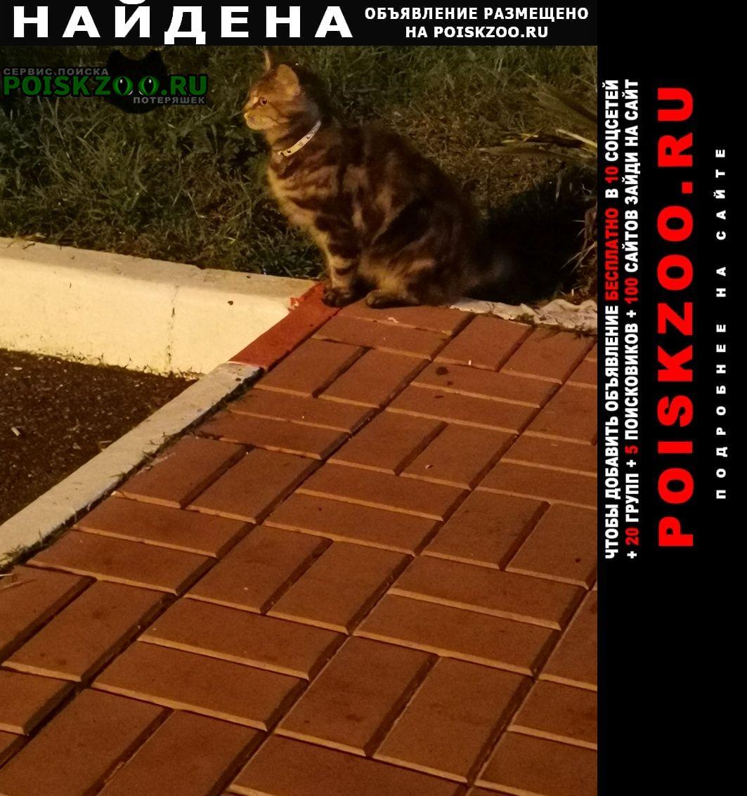 Найдена кошка краснодарский край, азс лукойл Анапа