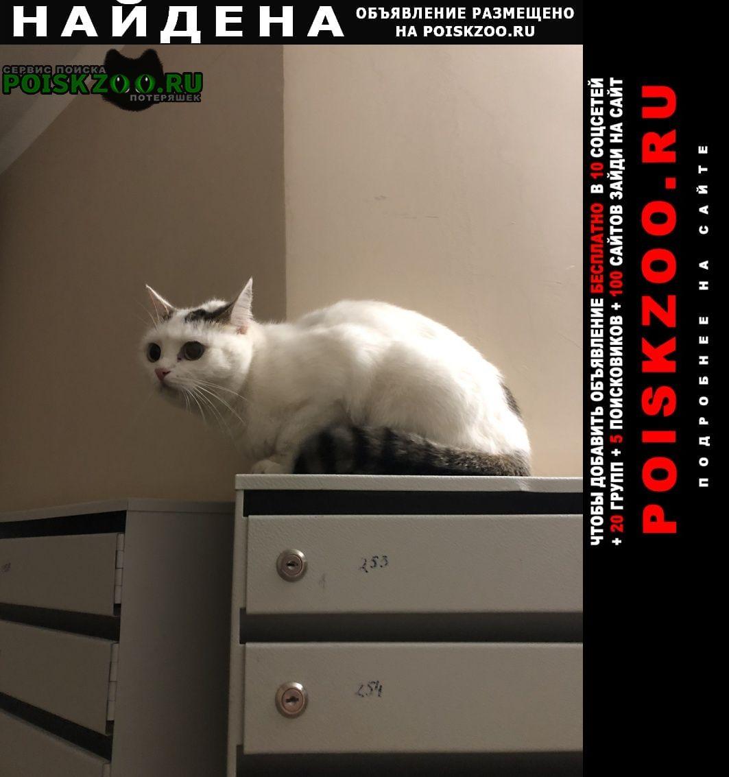 Найдена кошка проезд нижний/пролетарская Оренбург