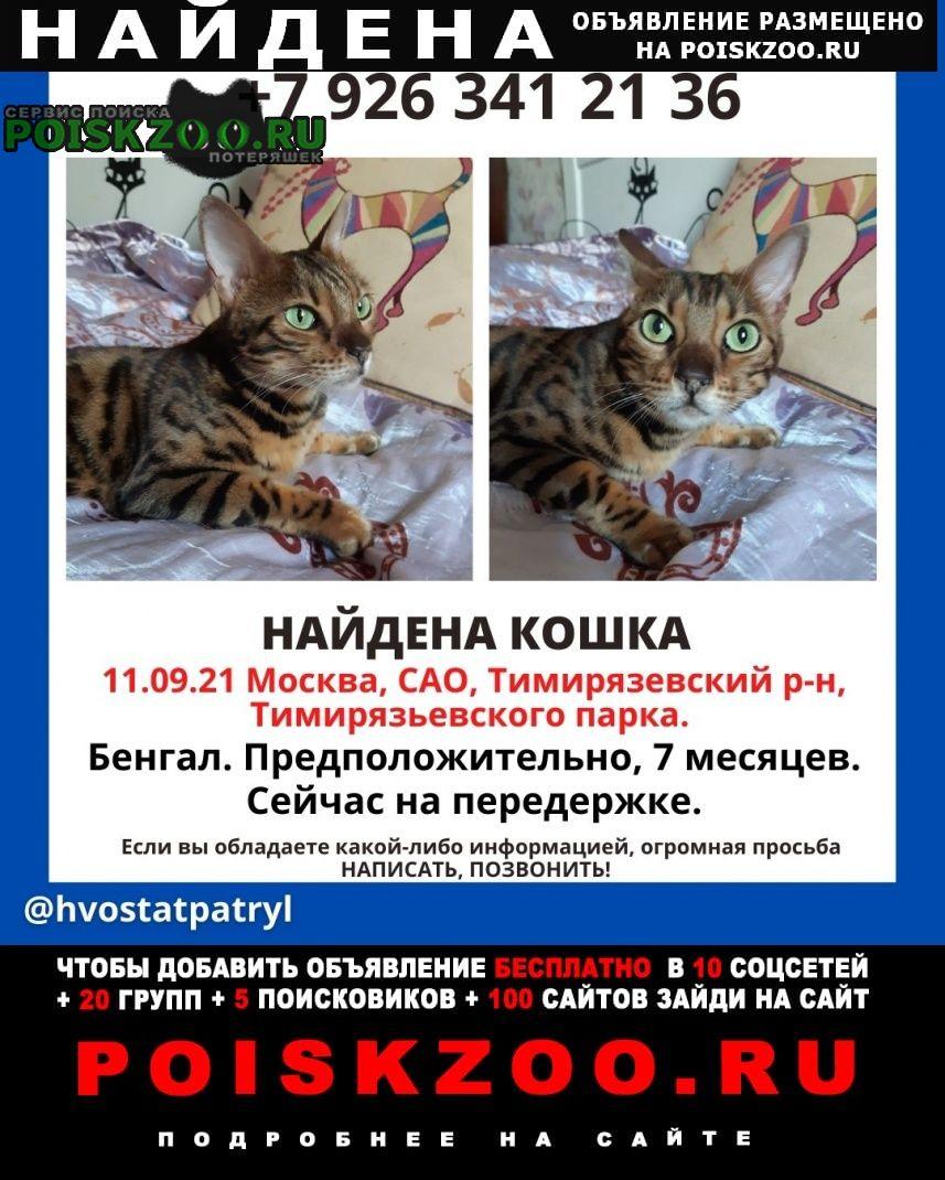 Найдена кошка бенгал Москва