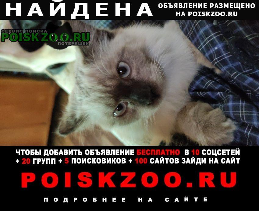 Найден кот Шахты