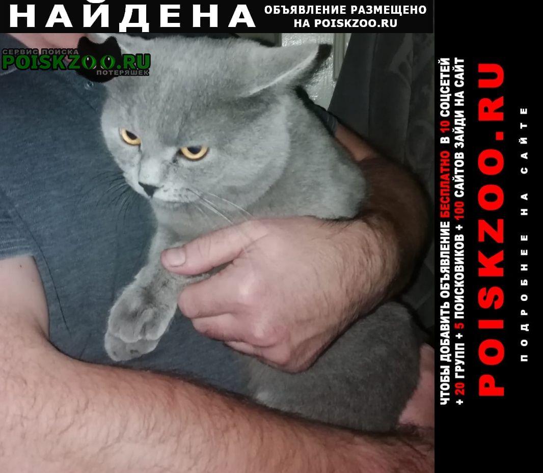 Найден кот т британец Балашиха