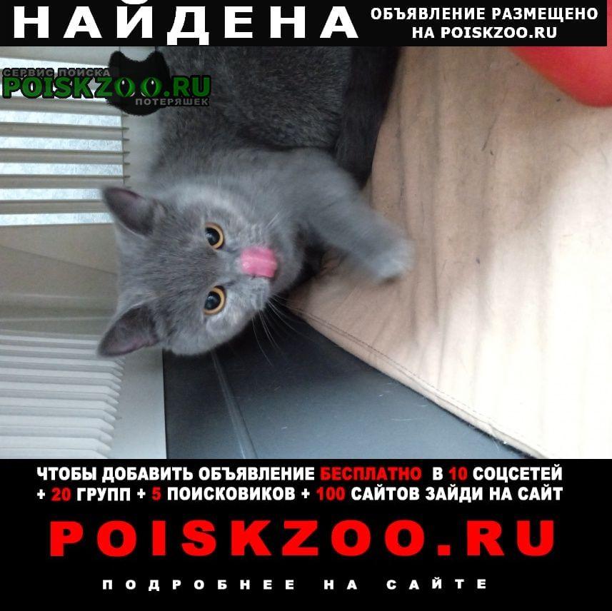 Найдена кошка 19сентября Красноярск