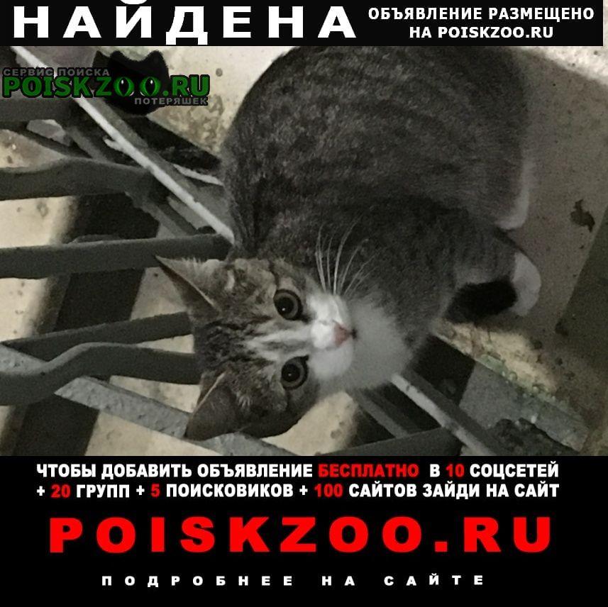 Найдена кошка метро академическая Москва