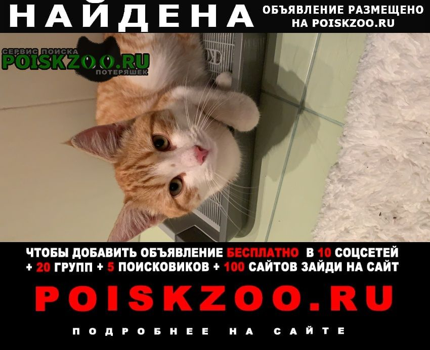 Найден кот бело-рыжий в московском район Санкт-Петербург