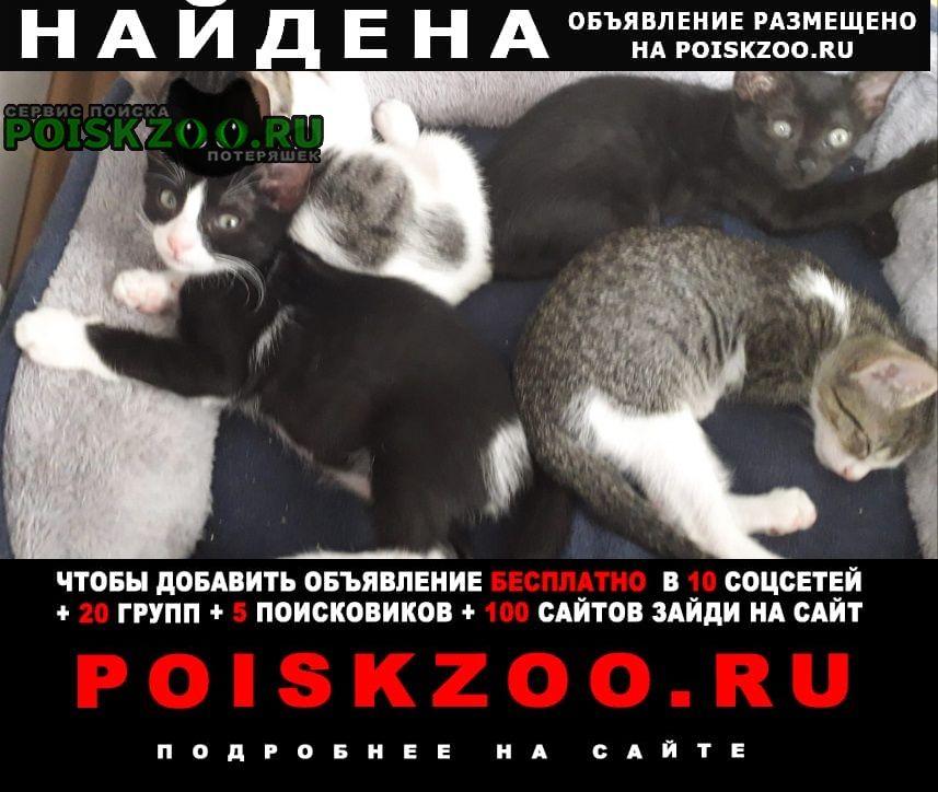 Найдена кошка нашлись котята Краснодар