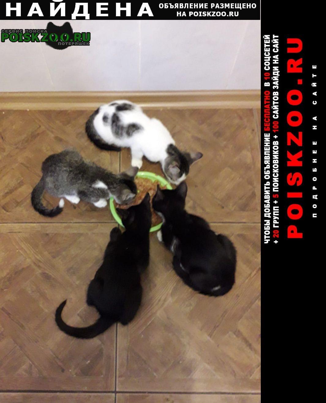 Найдена кошка котята Краснодар