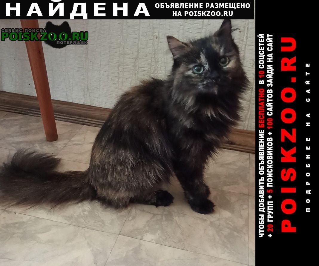 Найдена кошка черепаховый окрас (трехцветная) Москва