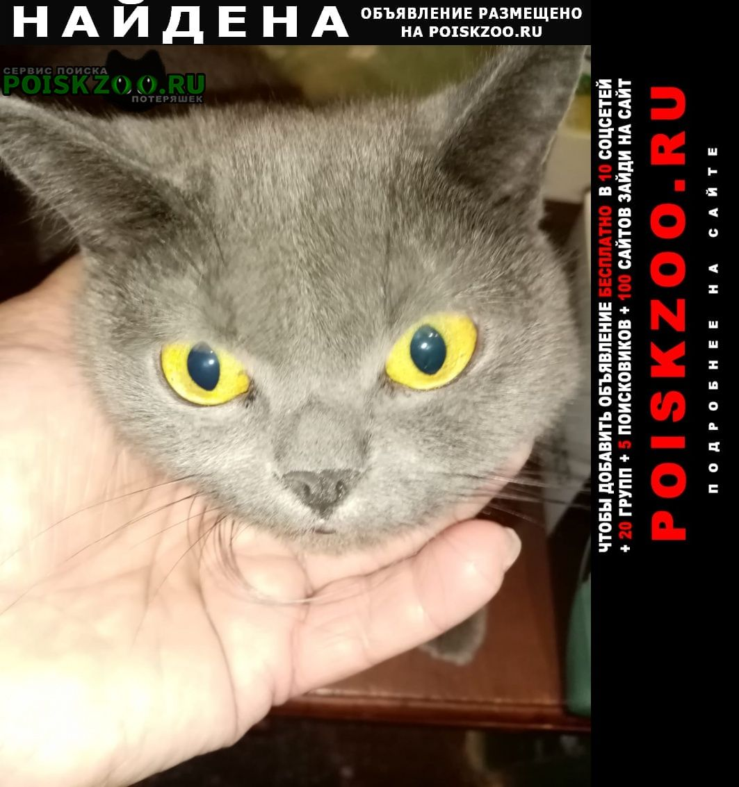 Найдена кошка ищем хозяина Шелехов