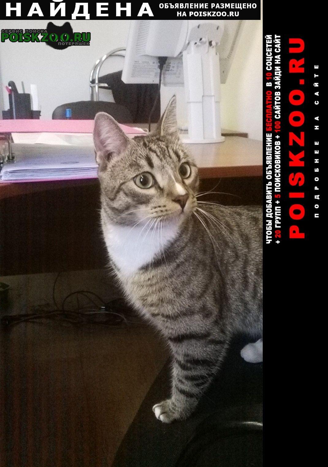 Найден кот молодой домашний, кострирован Выборг