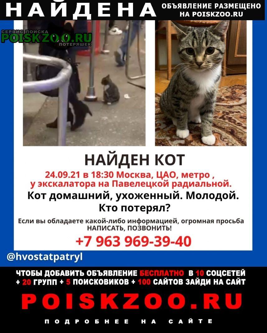 Найден кот метро павелецкая Москва