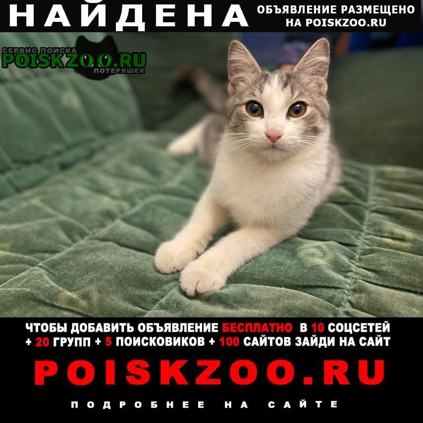 Найден котёнок около 4 мес Реутов