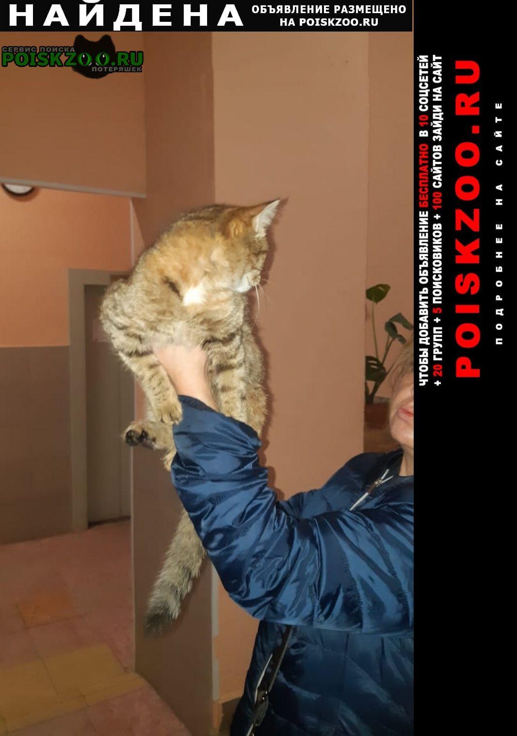 Найдена кошка явно домашняя, потерялась недавно Железнодорожный (Московск.)